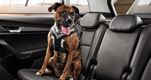 Safety Whether your passengers are people or pets, we've got accessories to ensure everyone arrives safely. Our child observation mirror sits just above the rear view mirror, helping you keep a watchful eye over the back seat. Whilst our dog seat belt keeps your best friend safe and snug, from home to park and back again.
